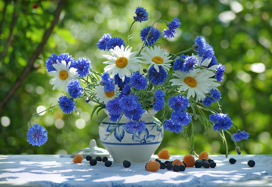 Летний день картинки с пожеланиями, воскресенск картинки
