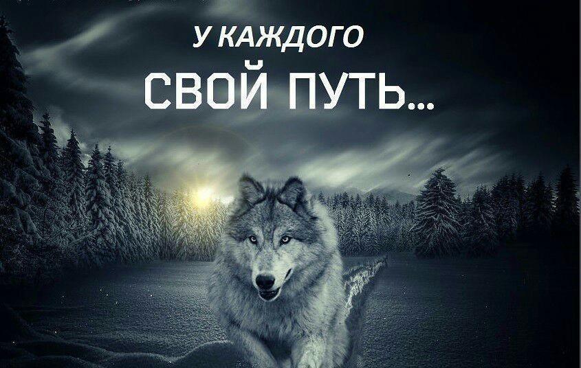 Тему, картинки с надписью волков