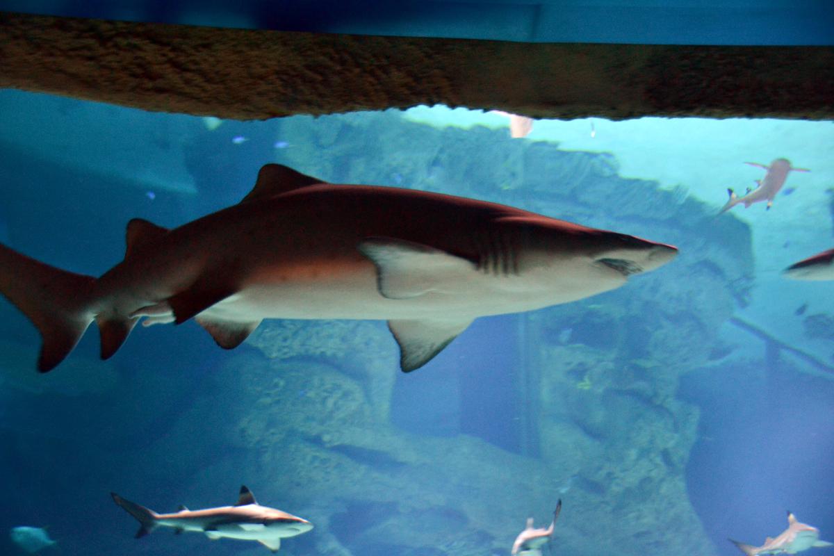 18. Акулы.